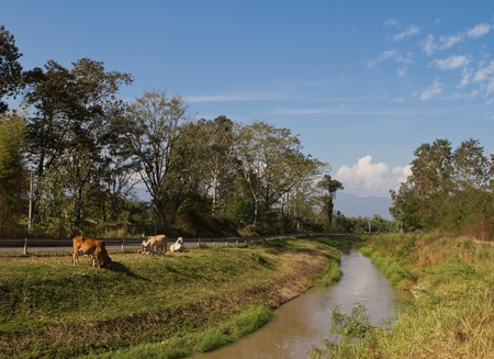 irrigation canal in Thailand photo