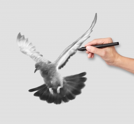beak doves: hand drawing a flying pigeon in black and white