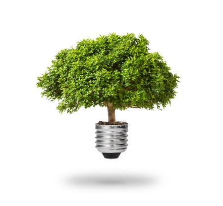 green energy eco concept, tree growing out of bulb photo