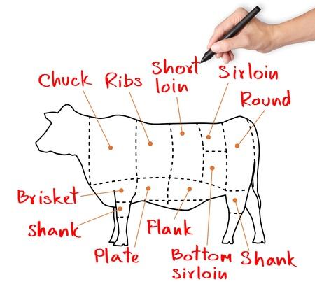 rind: Handzeichnung Kuh und Schnitt von Rindfleisch oder Rindfleisch chart Lizenzfreie Bilder