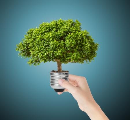 electricidad industrial: mano sostener eco bombilla de luz verde energ�a Foto de archivo
