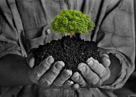 農民の手を保持小さな緑の植物、エコ ・ コンセプト 写真素材
