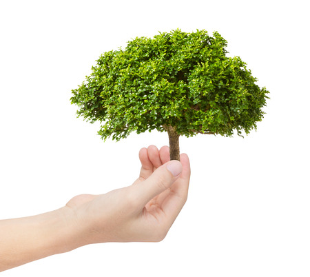 環境コンセプトとして手で緑の木 写真素材 - 25168561