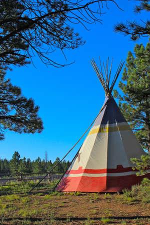 ponderosa pine: Teepee among ponderosa pine trees