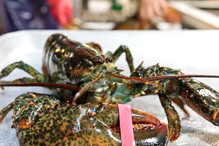 fisheries: fresh lobster at fisheries wholesale market in seoul