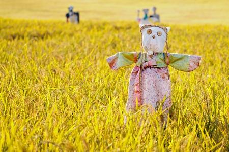 espantapajaros: Espantapájaros en el campo de arroz durante el Chuseok, fiesta tradicional coreano