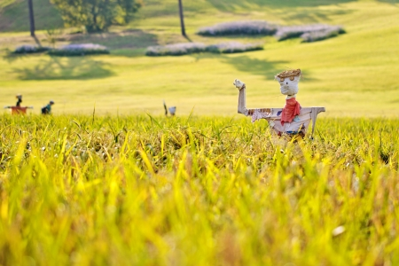 selected: Scarecrows on the rice field with selected focus
