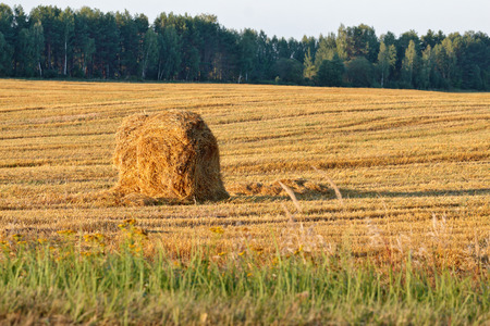 haymow: Russian countryside landscape with a haystack