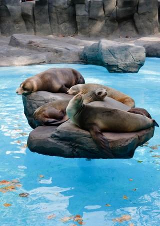 Seals relaxing in Barcelona Zoo Stock Photo
