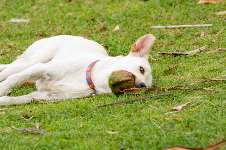 trundle: The dog is playing with the coconut that it is fun.