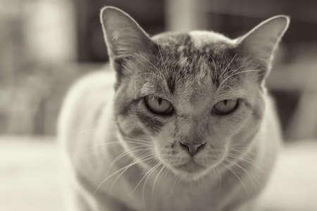 tame: Cat