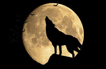 De wolf howling op de volle maan Stockfoto