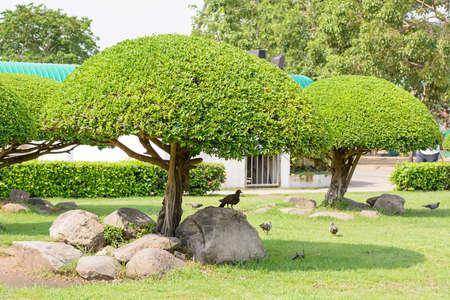 birds in tree: The birds  tree in the garden