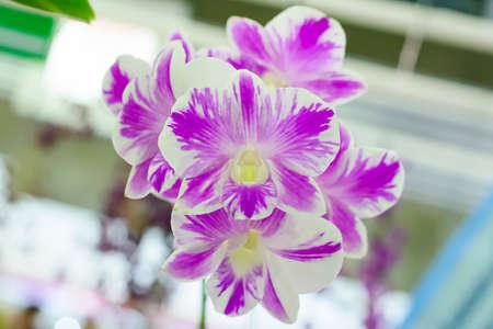 flores moradas: Orqu?dea