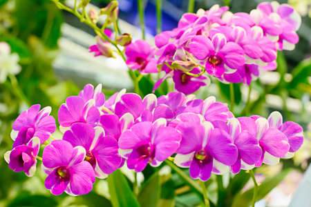 orchids: Orchid