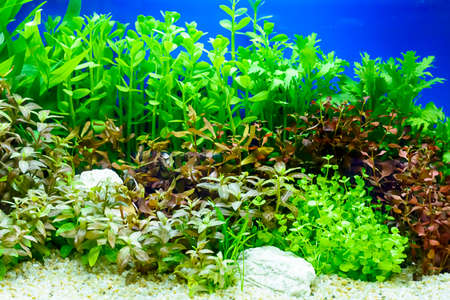 aquatic: The water plant or aquatic plant or aquatic weed in the cabinet. Stock Photo