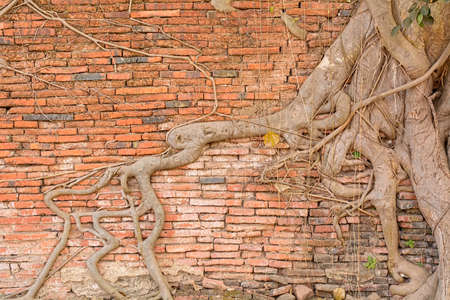 working stiff: Stone wall & tree roots texture made from stiff stone. Stock Photo