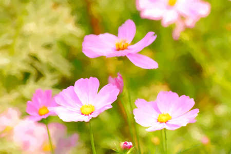 flowering plants: Watercolor cosmos is flowering plants in the sunflower family. Stock Photo