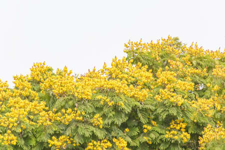 Yellow flowers on the white sky background.