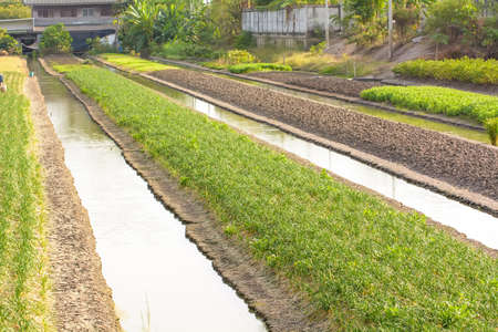 Small rice field for family eating. Not for trading.