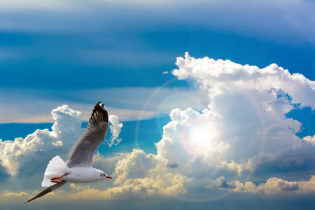 migrated: The seagulls flying. Seagulls migrated to Thailand in the winter. Stock Photo
