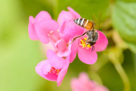 Bee eating pollen from flower on a nature background. Stock Photo