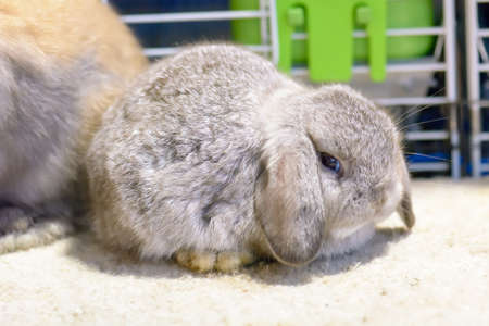 Rabbit brown. Its small mammals. Bunny is a colloquial name for a rabbit.