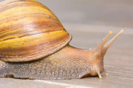 Closeup of a snail on tiled floor. Stock Photo