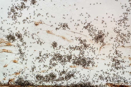 The black ants swarm on the walls. Stock Photo