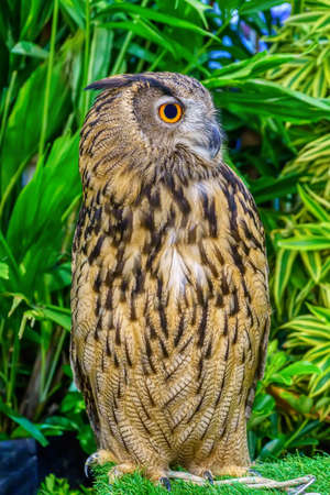 Owl in the garden simulation. It is a popular pet in Thailand. 写真素材 - 131988065