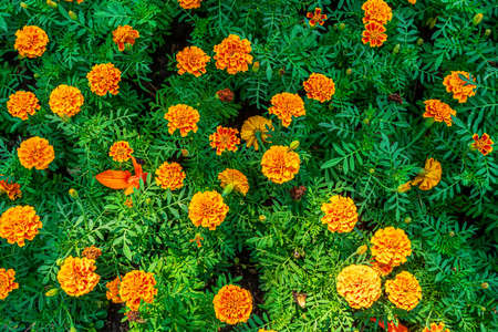 The flowers are beautiful and refreshing on a nature background.