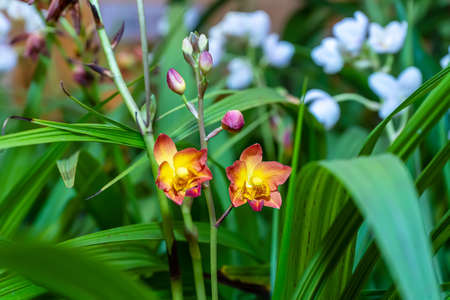 Orchid has several species, bright colors and beautiful.
