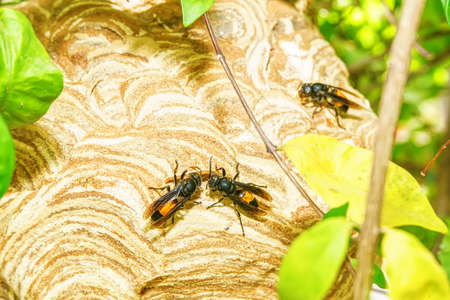 Wasp are flying in-out of the nest to find food and nesting materials. Banco de Imagens