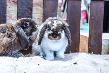 The rabbits are in the stable waiting for feeding.