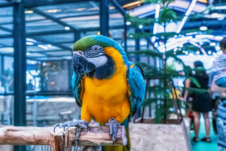 Macaw perched on a branch. Bird is a popular pet in Thailand. Banco de Imagens