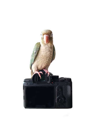 Green-cheeked parakeet standing on camera isolated on a white background. Banco de Imagens