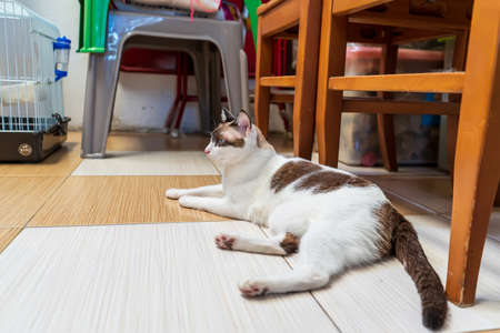 The cat was lying on the cement floor. It's cute.