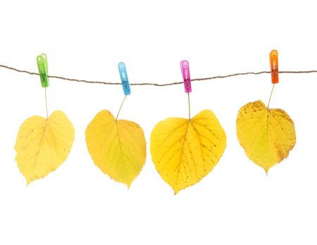 Autumn leaves and clothes pegs, isolated on white photo