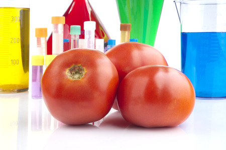 genetically modified organism: Genetically modified organism - ripe tomatoes and laboratory glassware Stock Photo