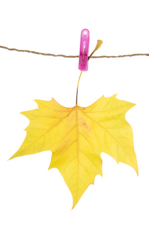 clothes peg: Autumn leaf and clothes peg, isolated on white Stock Photo