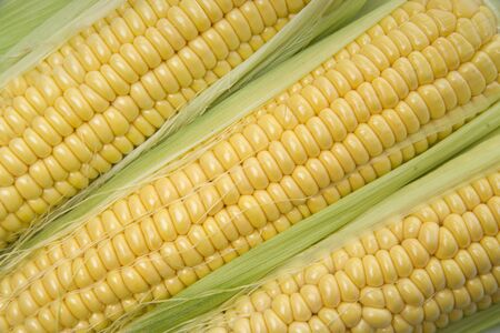 Corn cobs whit green leaves Imagens
