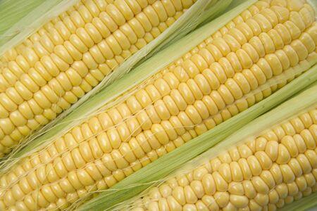 Corn cobs whit green leaves Standard-Bild