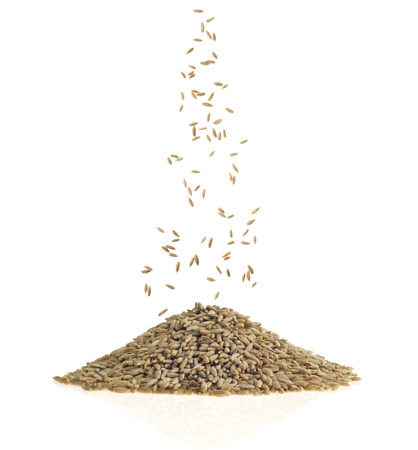 Rye grains on white background 写真素材