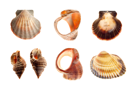 shells and sea snails, isolated on white background