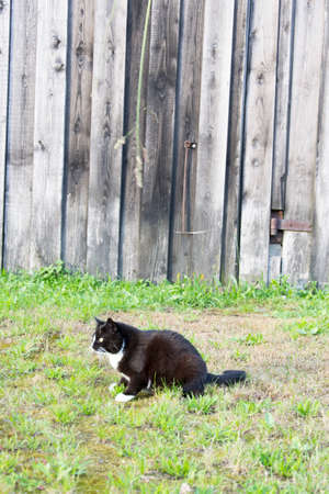 cuteness: a cat outside