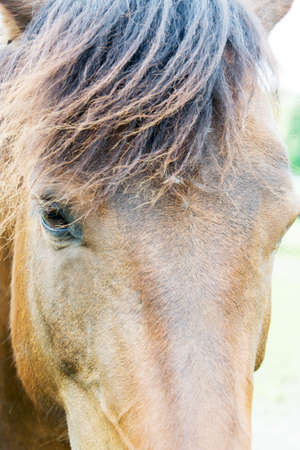 at close quarters: a brown horse Stock Photo