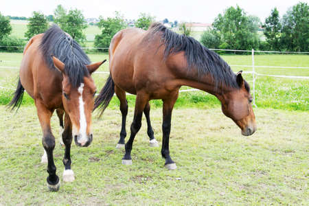 gelding: photo of horses
