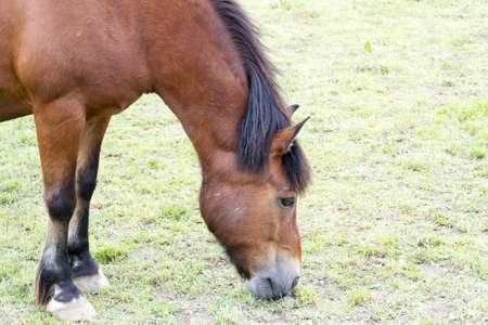 gelding: photo of a horse