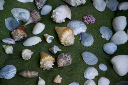 some seashells