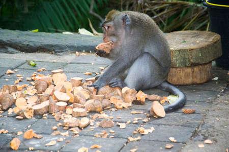 ubud: Monkey Forest Ubud Bali Indonesia